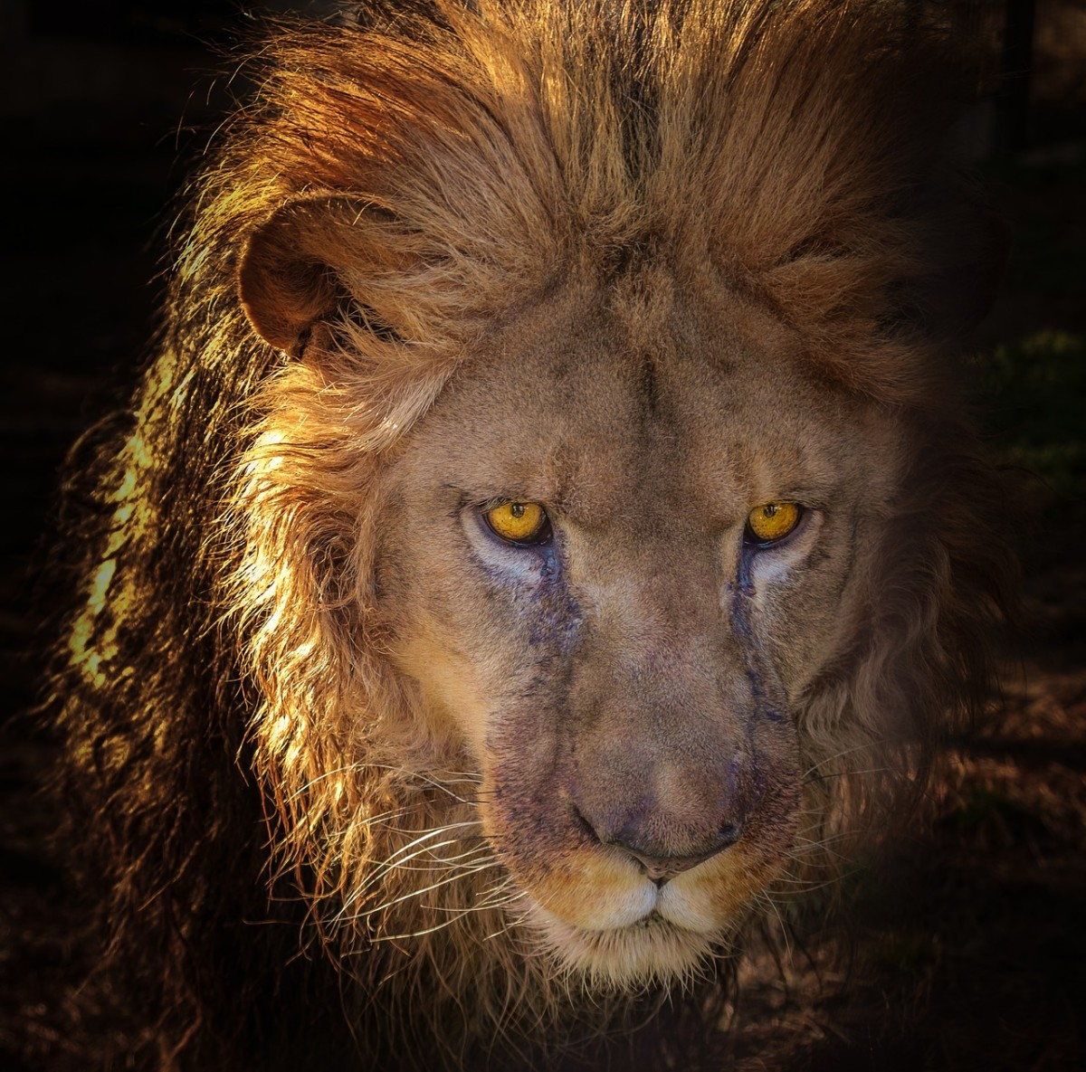 Aslan, the lion from the Chronicles of Narnia