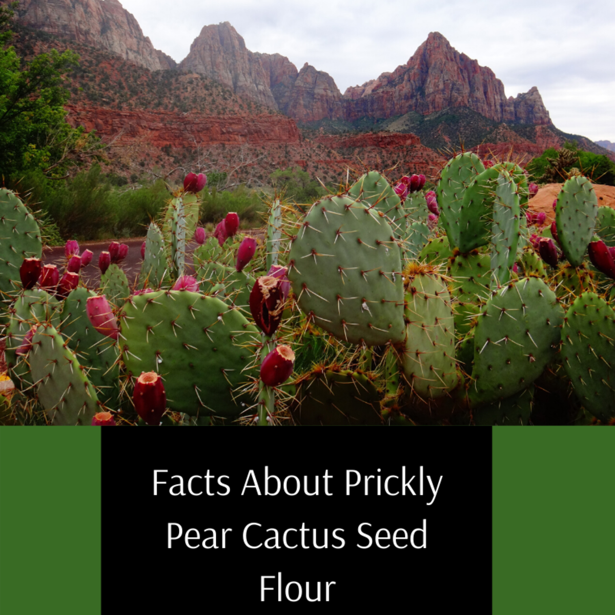 Prickly Pear Cactus Seed Flour