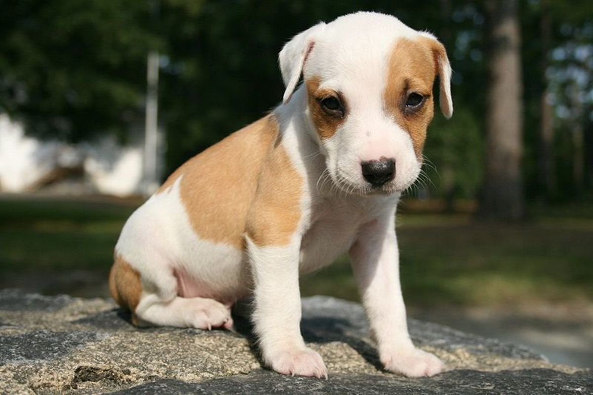 How to Teach a Puppy to Sit, Stay, and Wait