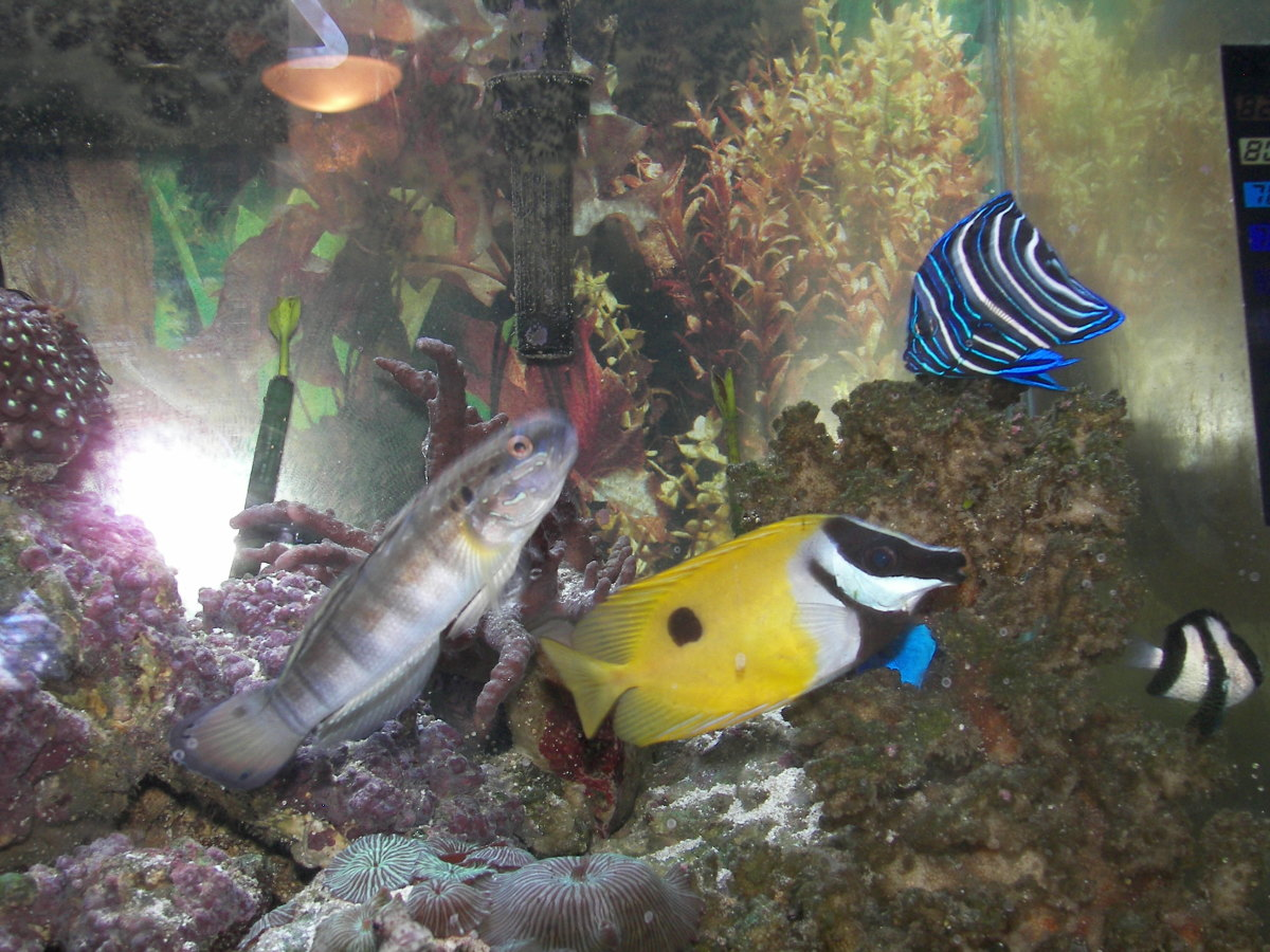 Setting up a self sustaining saltwater fish tank aquarium for Setting up a fish tank