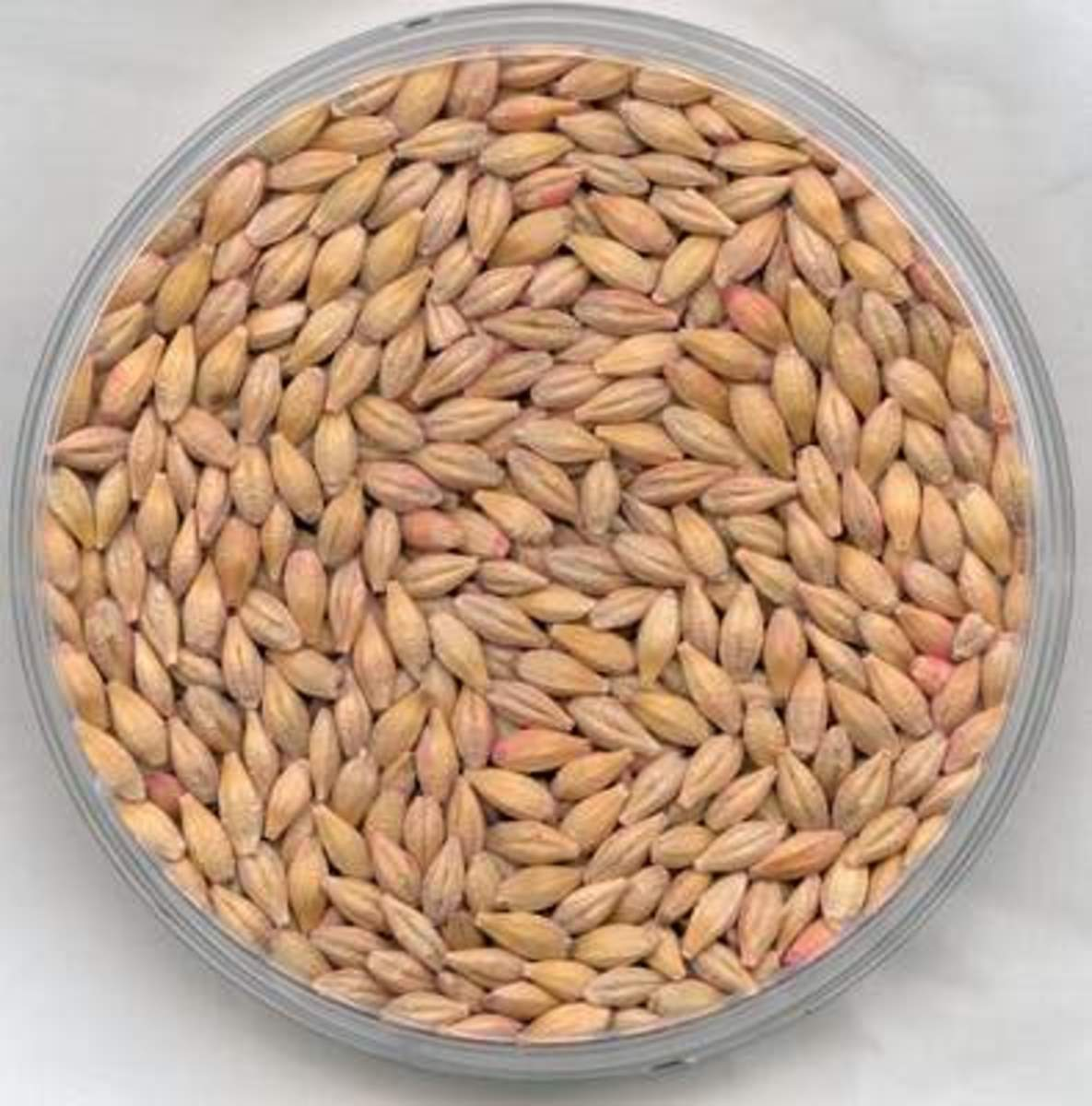This article will provide some tips on how to improve your cooking of barley.