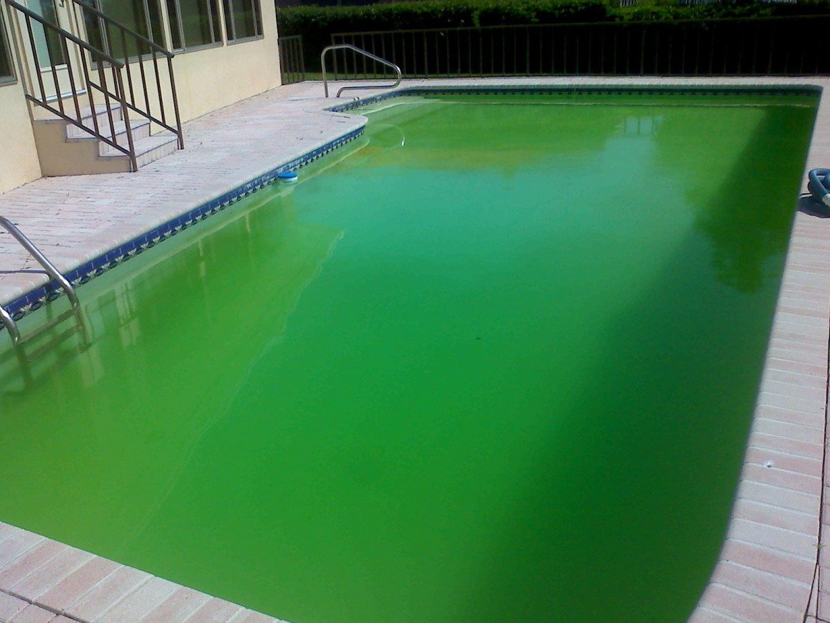 How to clean a green and cloudy pool with a filter. Drop out, Flocculent