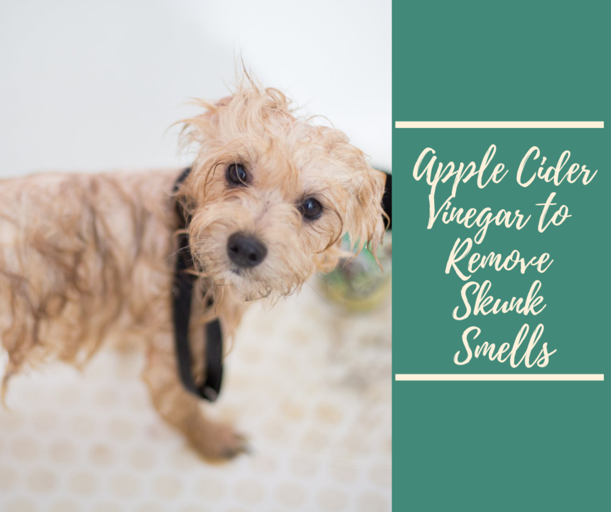 Read on to learn how apple cider vinegar can help remove skunk smell from your dog.
