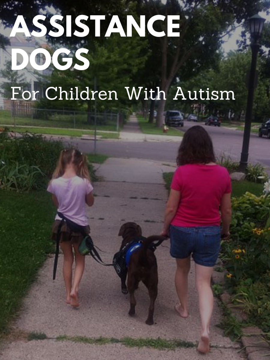 With the child secured to the service dog by a lead attached at their waist, parents can be more confident that their child won't run into harms way.