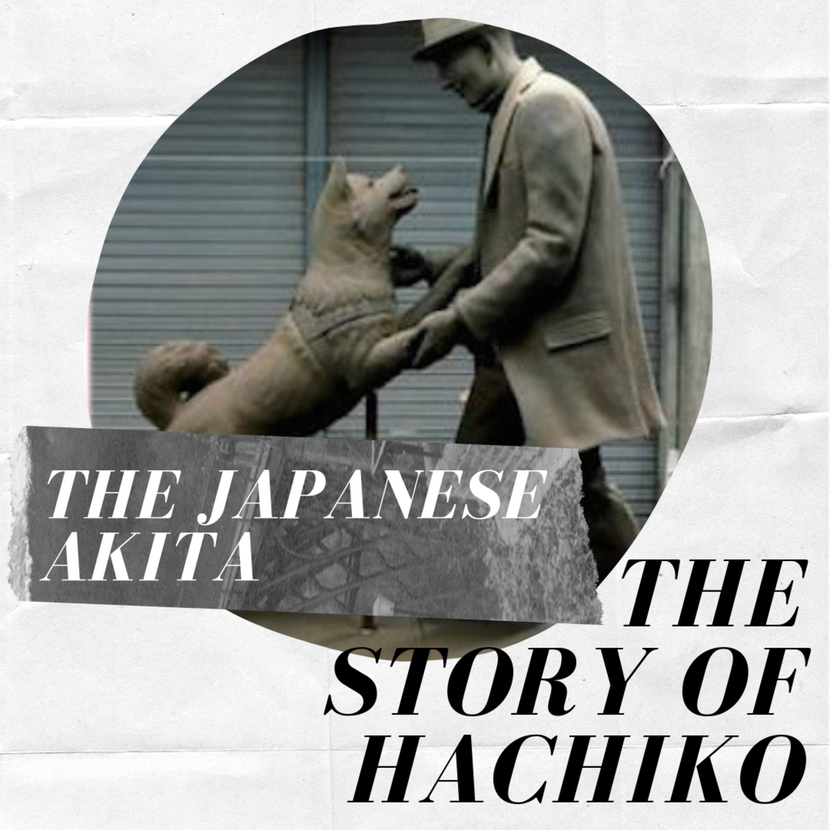 Japanese Akita Inu: The Story of Hachiko, the Loyal Dog