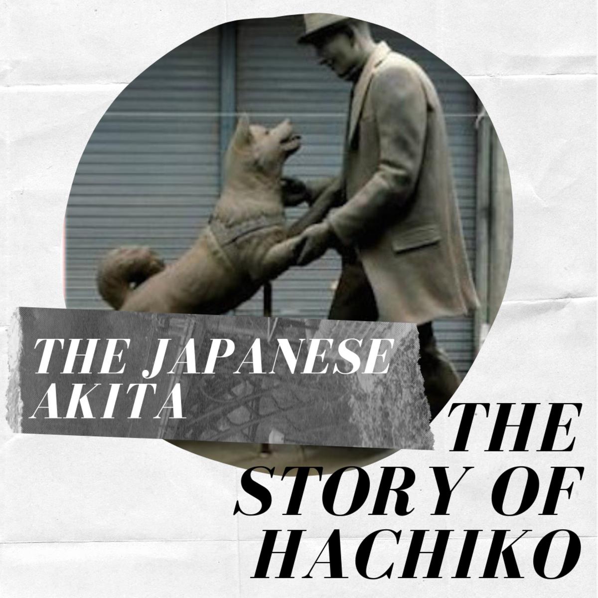 Japanese Akita Inu: The Story of Hachiko, the Loyal Dog