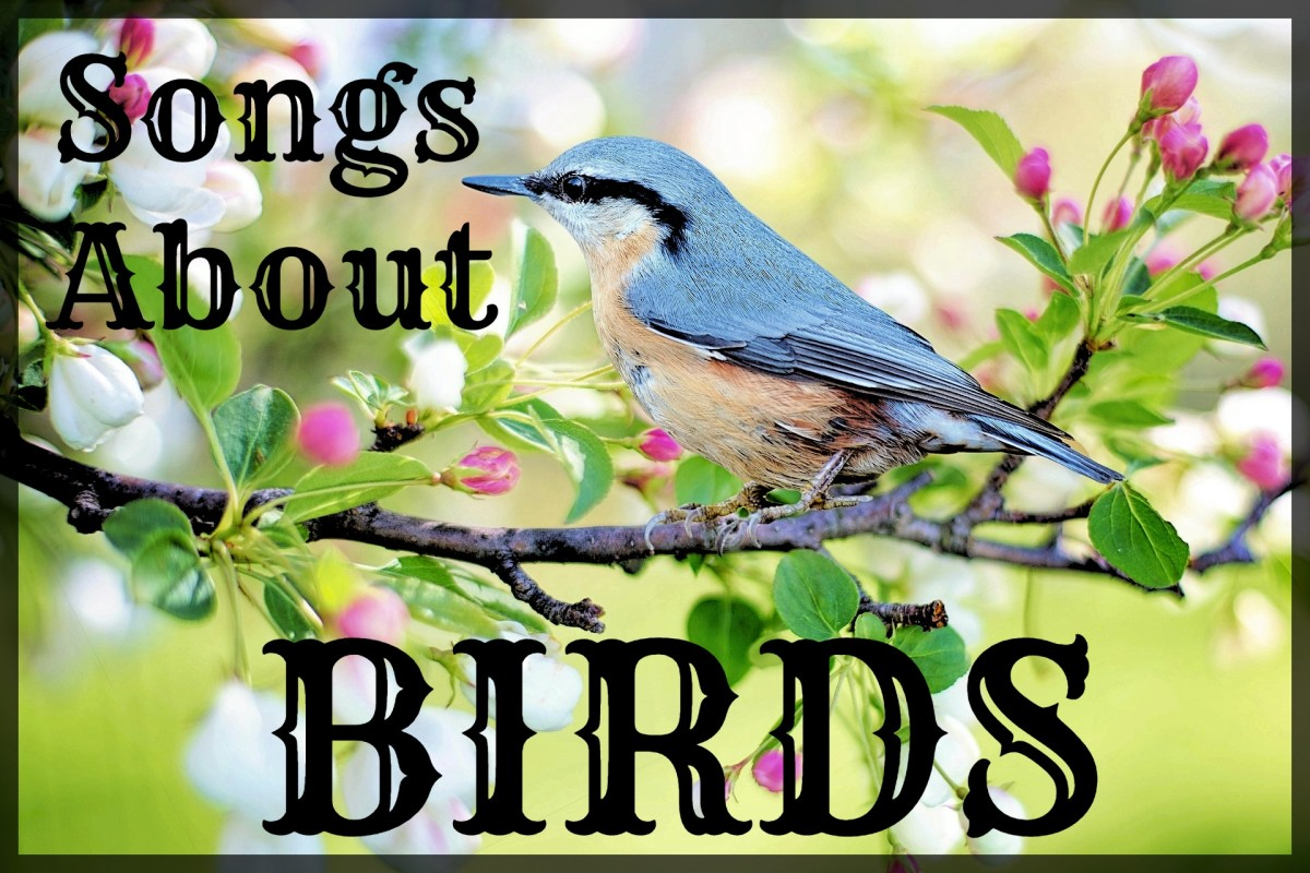 Celebrate sweet songbirds, soaring eagles, and other birds with a playlist of pop, rock, and country songs. Tweet, tweet!