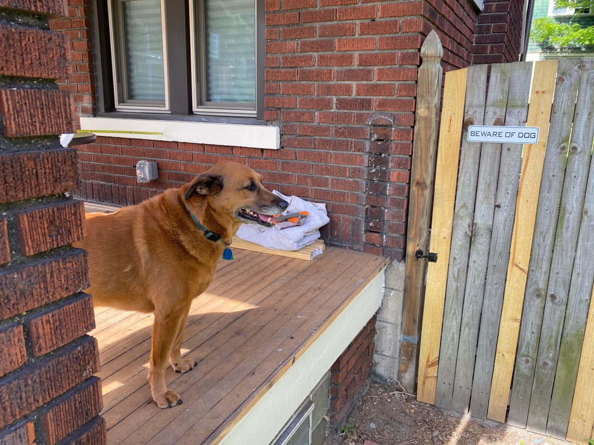 A porch that needs a railing and the world's best assistant: Ella the Brown Wonder