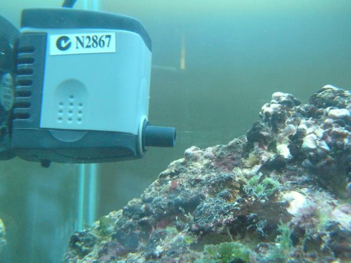 Meet the powerhead: a useful aquarium tool.