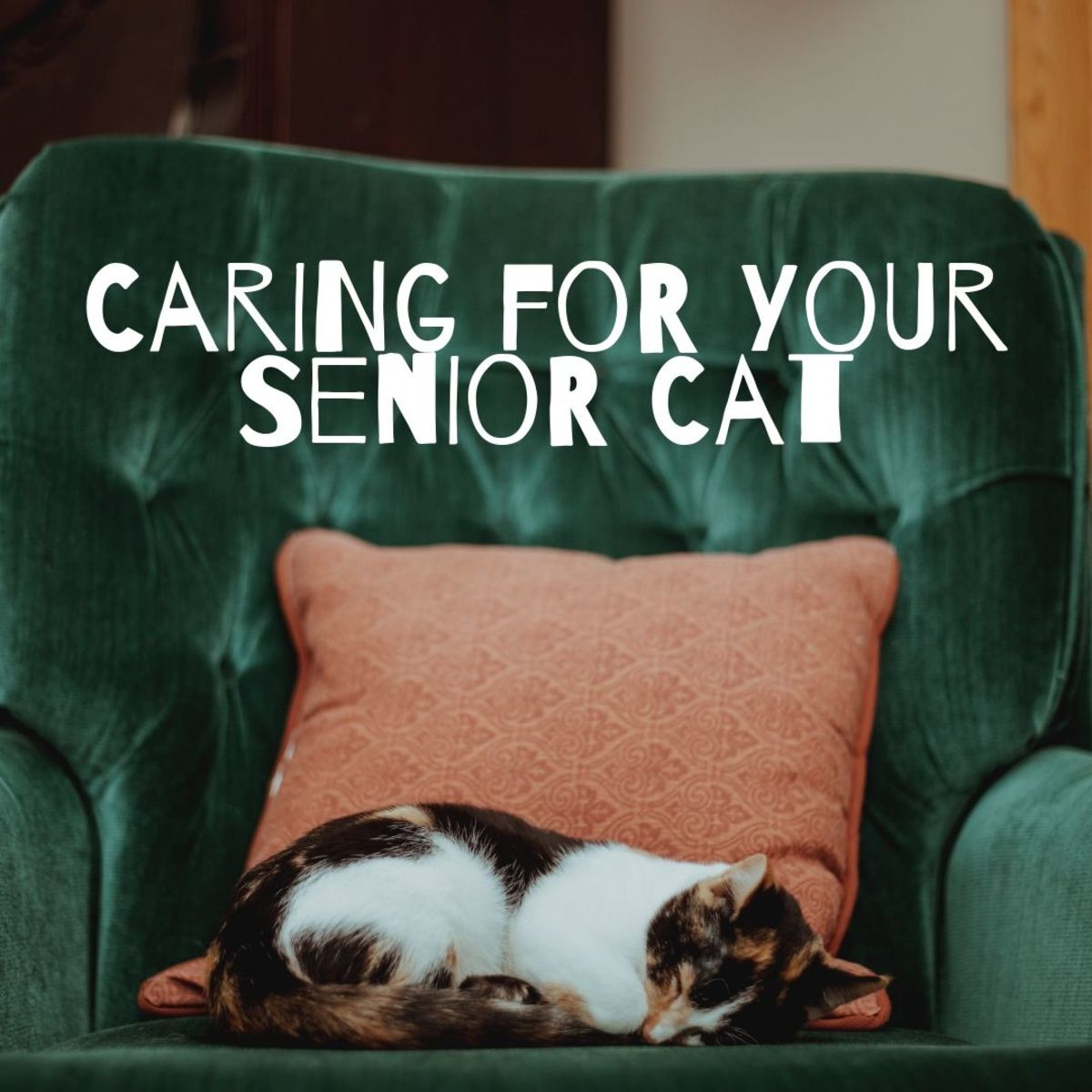 Learn how to improve the quality of life for your senior cat