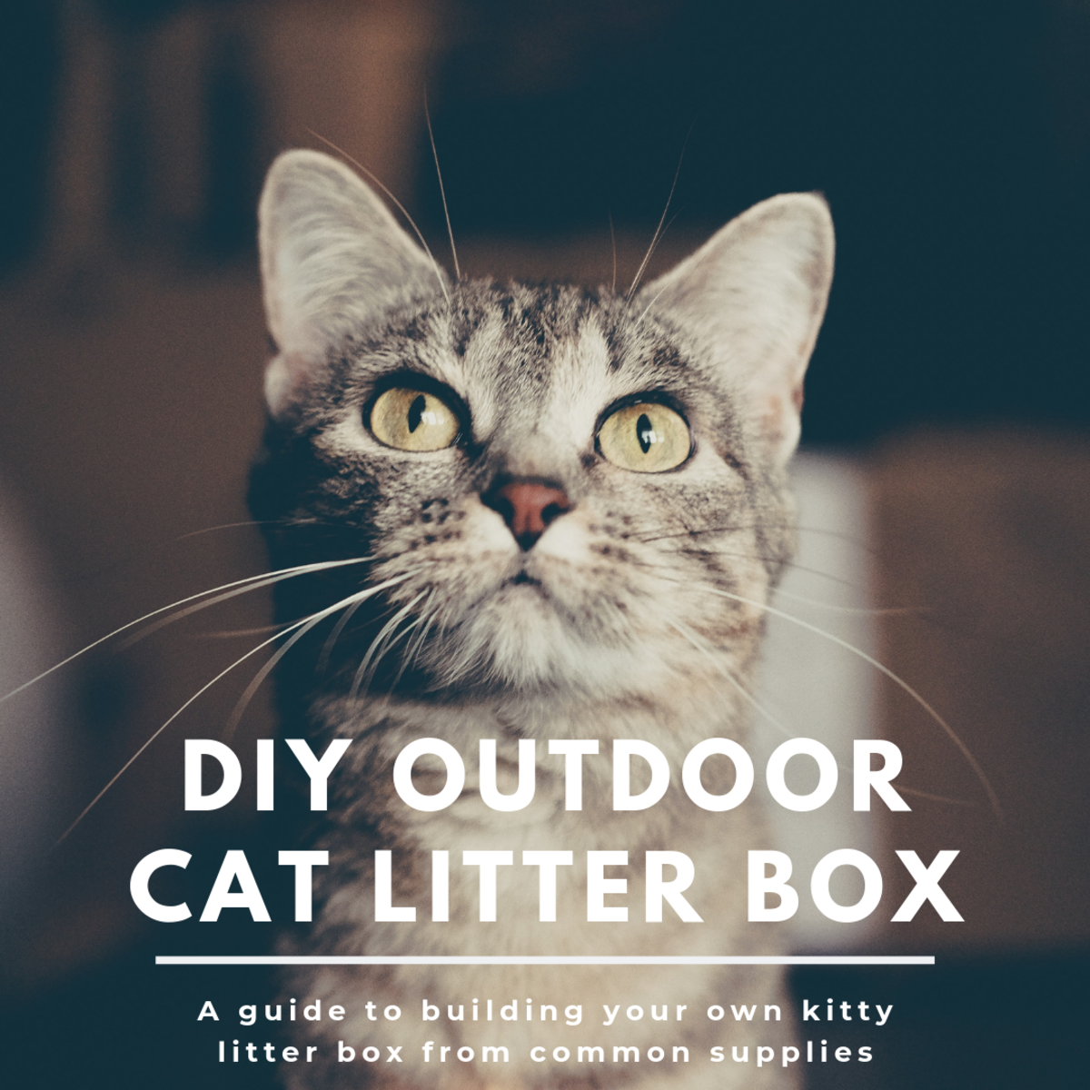 This guide will break down how to make your own outdoor cat litter box from some common building materials and some Oil-Dri.
