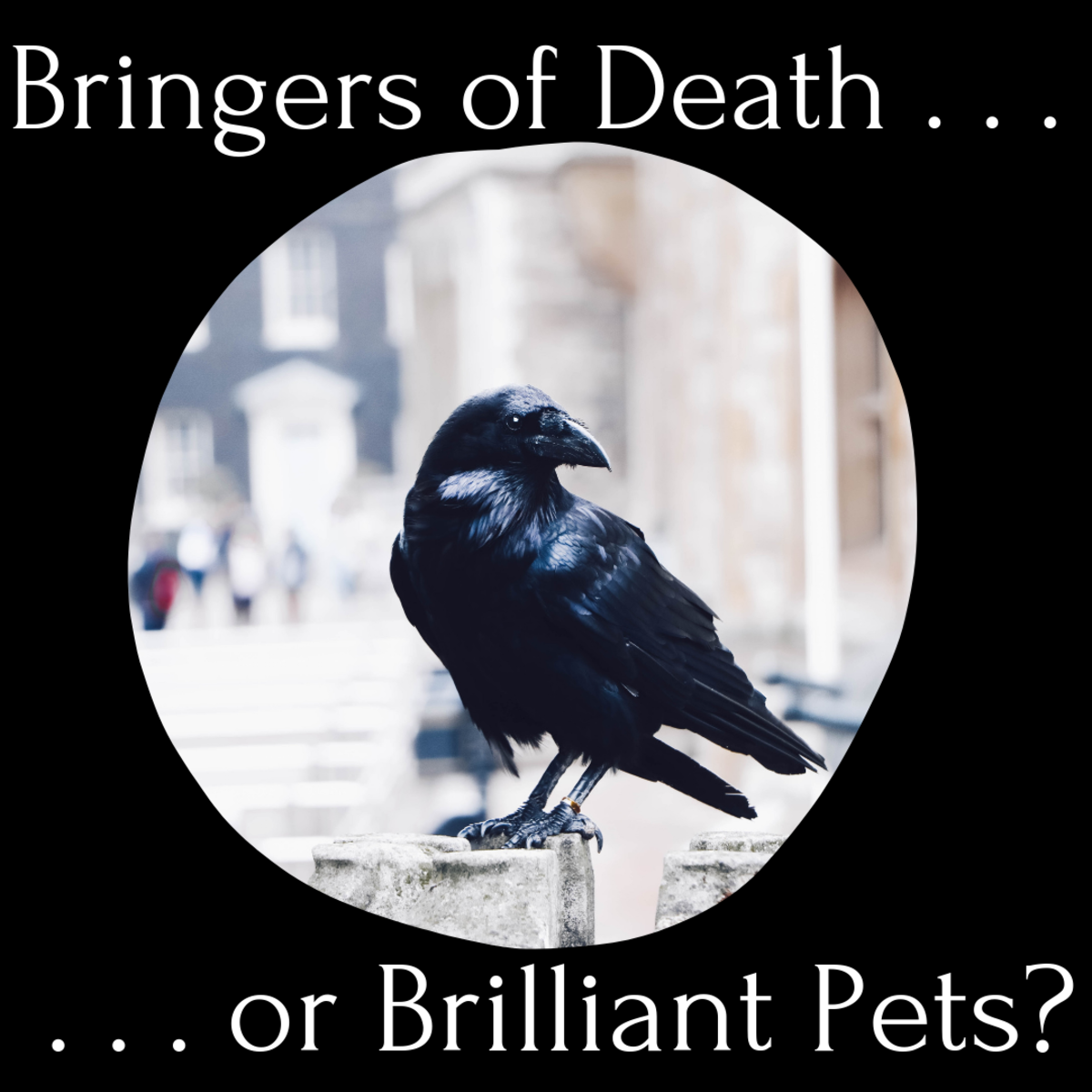 The Black Crow Superstition (What I Learned When Caring for