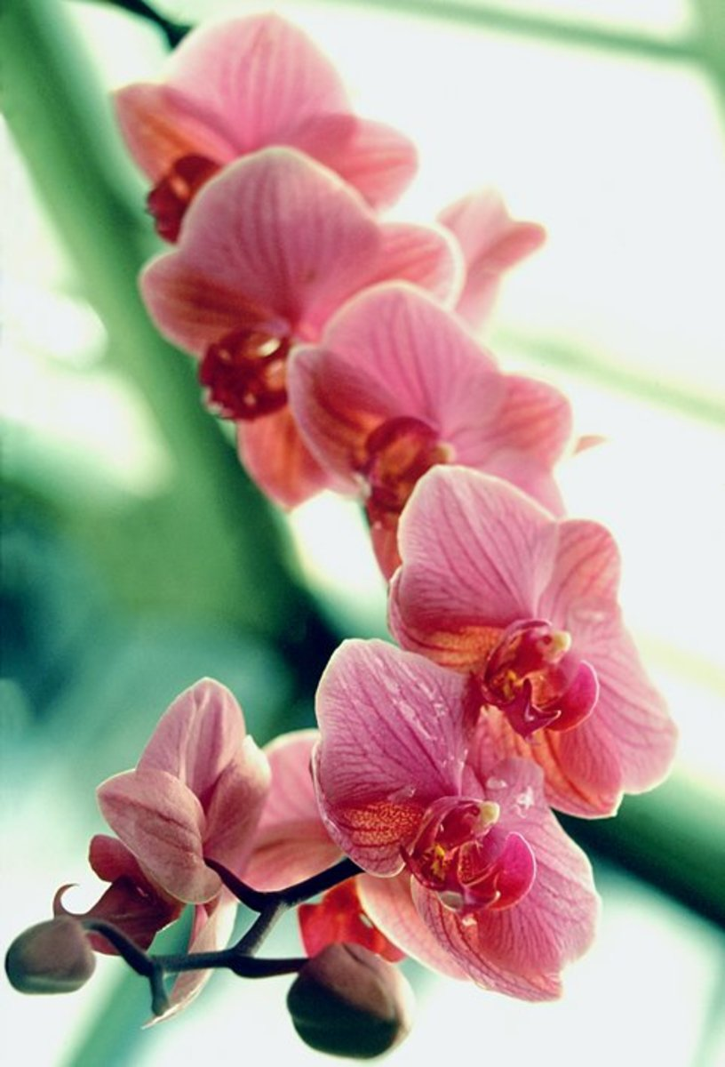 Growing Orchids 101