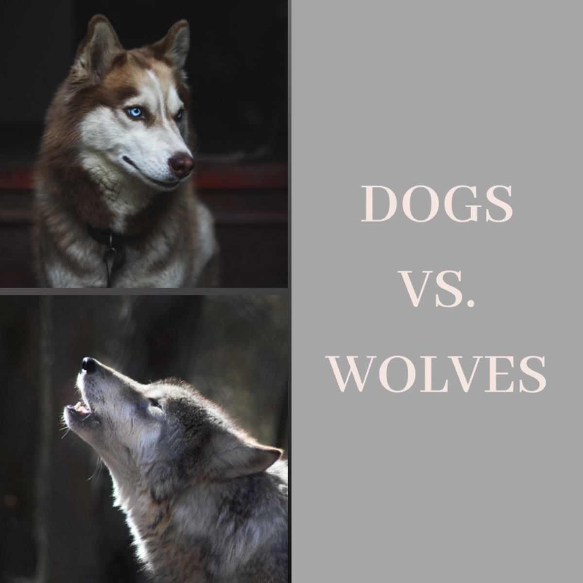 How are dogs and wolves the same?