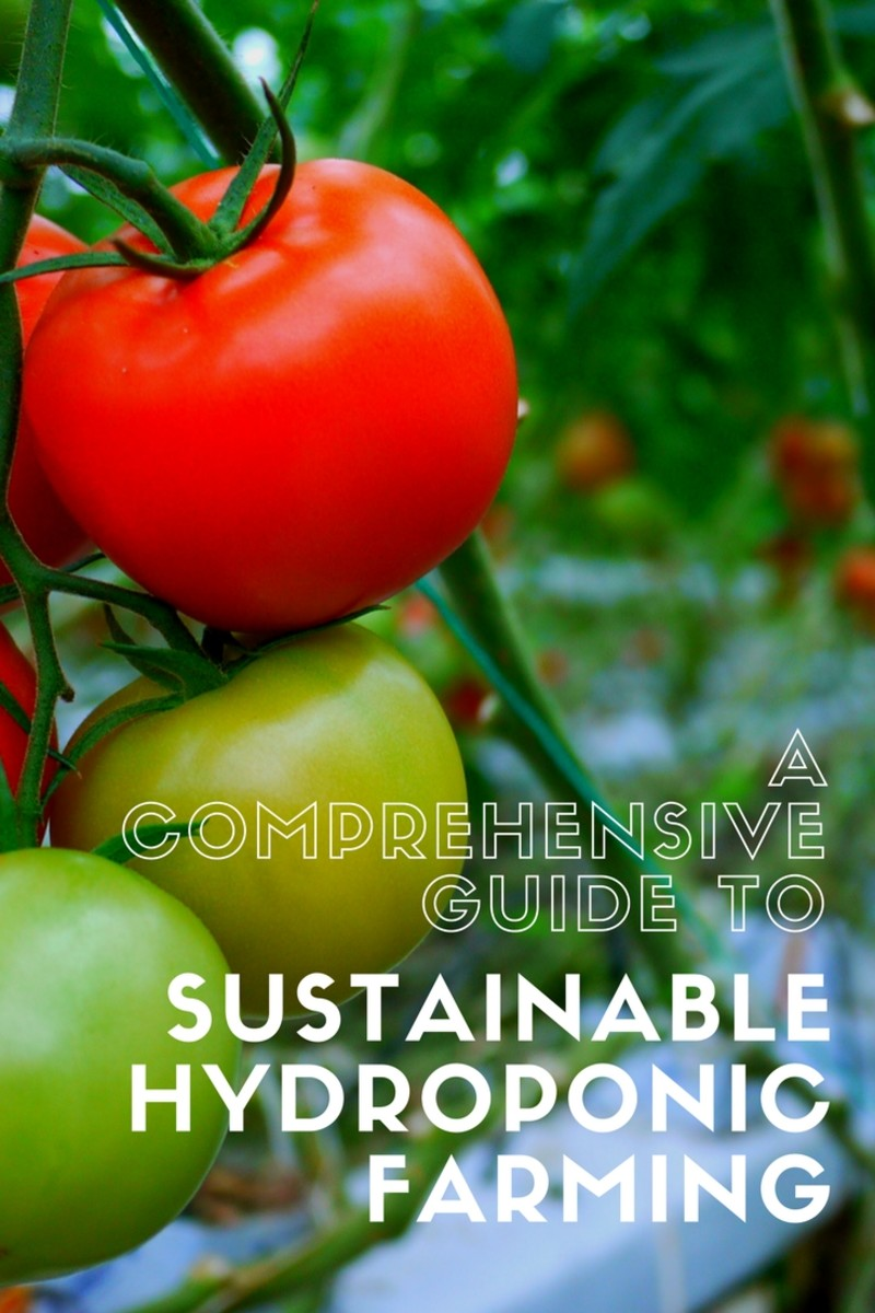 A Comprehensive Guide to Sustainable Hydroponic Farming