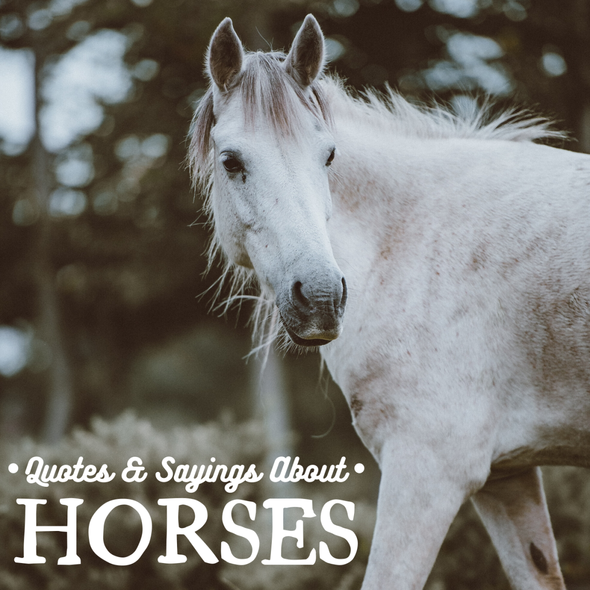 Horses have been companions to humankind for millennia—these quotes are all about their importance in our lives.