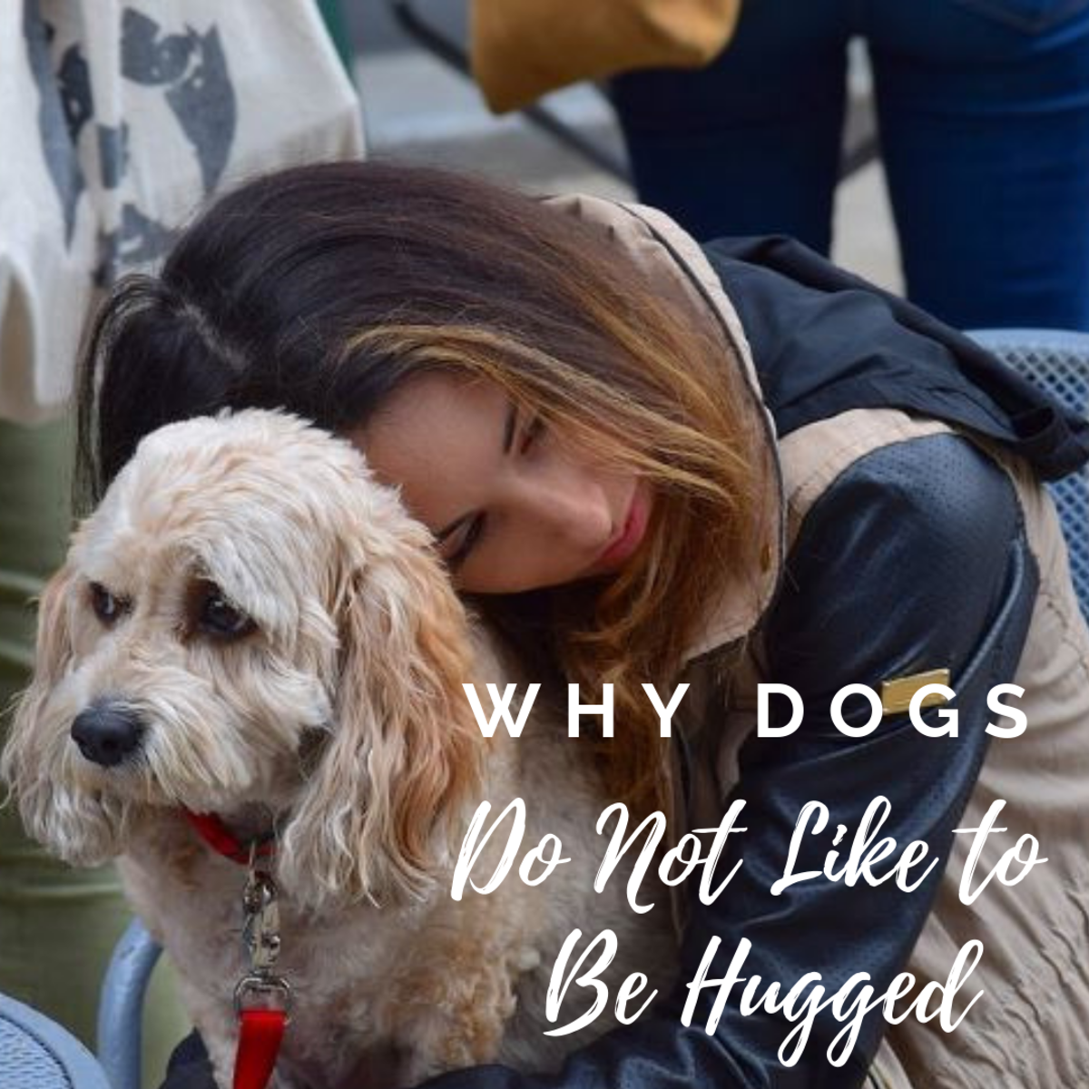Why Dogs Do Not Like to Be Hugged