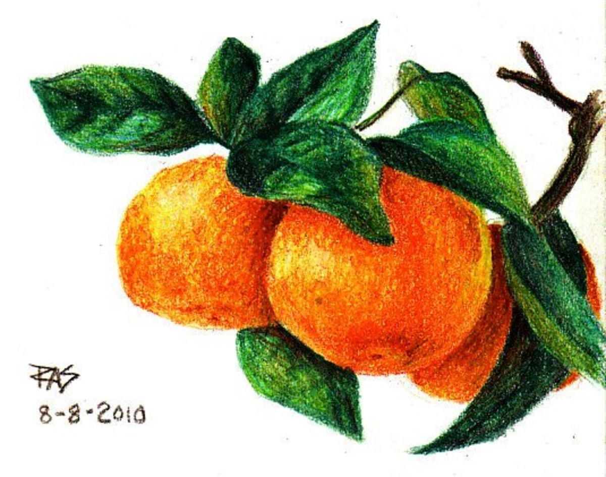 """Tangerines, colored pencil drawing 4"""" x 5"""" by Robert A. Sloan, you may copy this drawing if you credit my tutorial and link to it when you post it online. Sourced from photo by Patty_S on WetCanvas.com."""