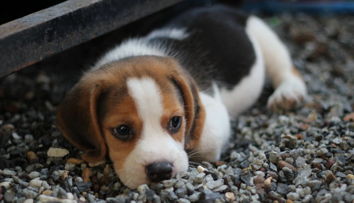 How to Tell If Your Dog Has Ringworm