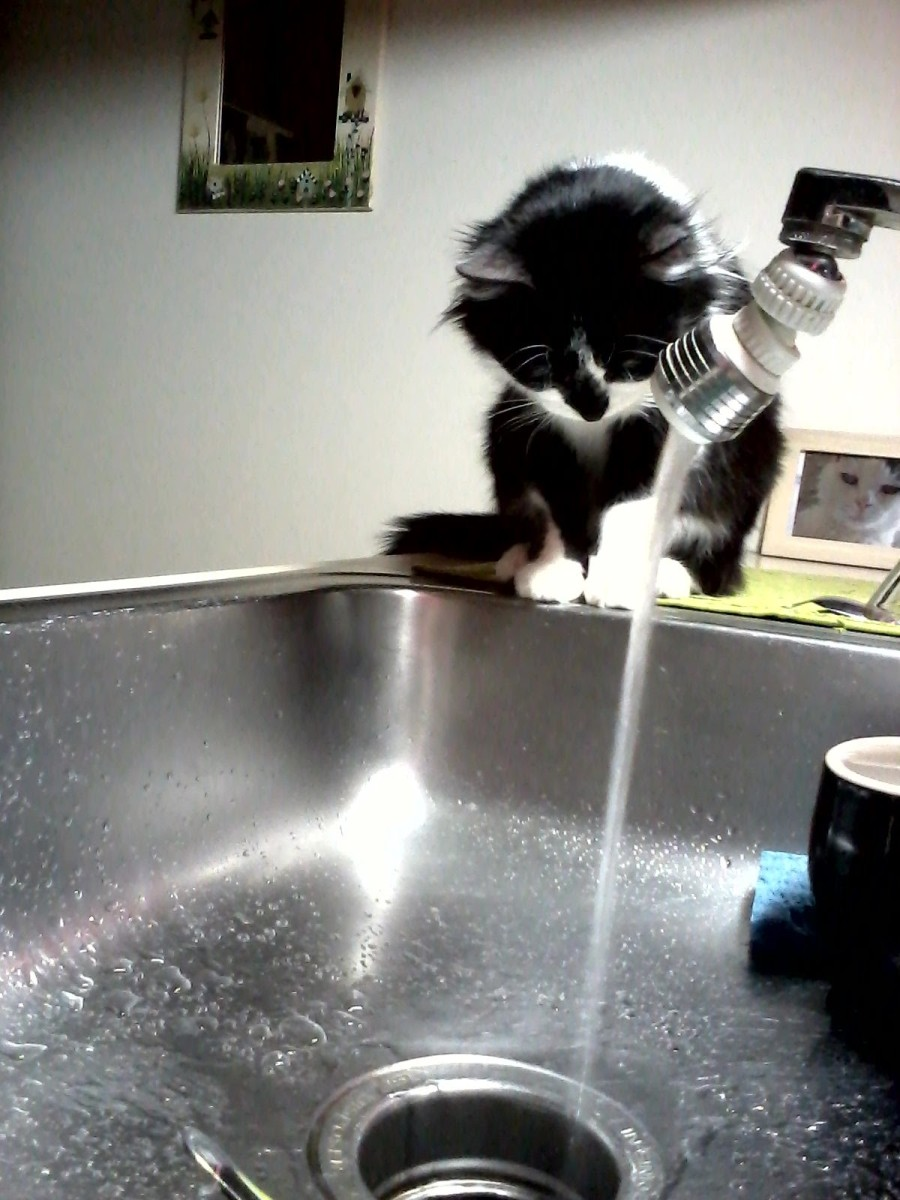 Why Do Cats Like Drinking From The Water Faucet?