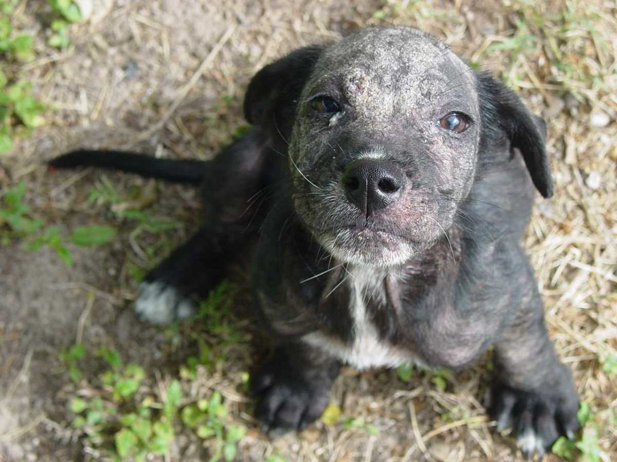 A Puppy With Mange
