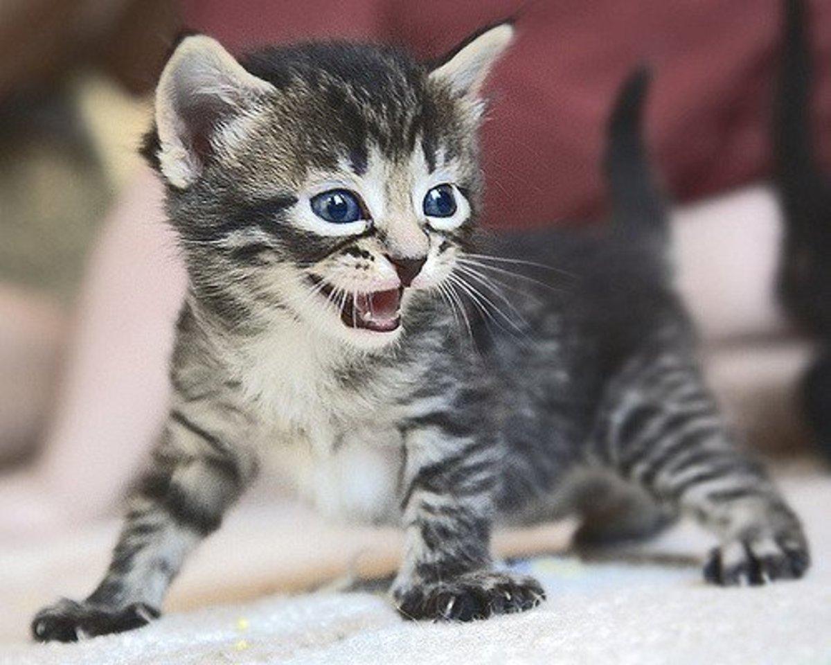 Kittens Are Soooo Cute