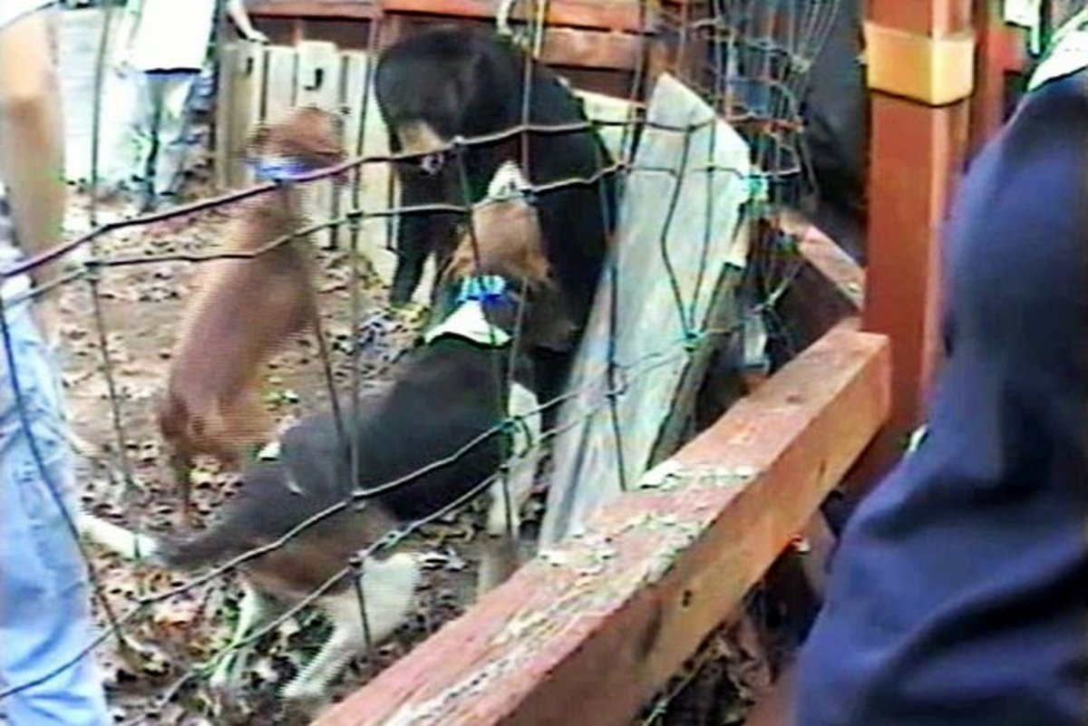 South Carolina Usa, Bear Baiting in the 21st Century