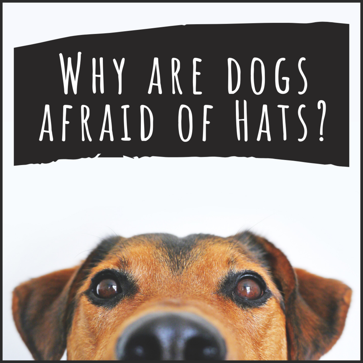 Many dogs are afraid of hats, but don't worry—there are things you can do to help.