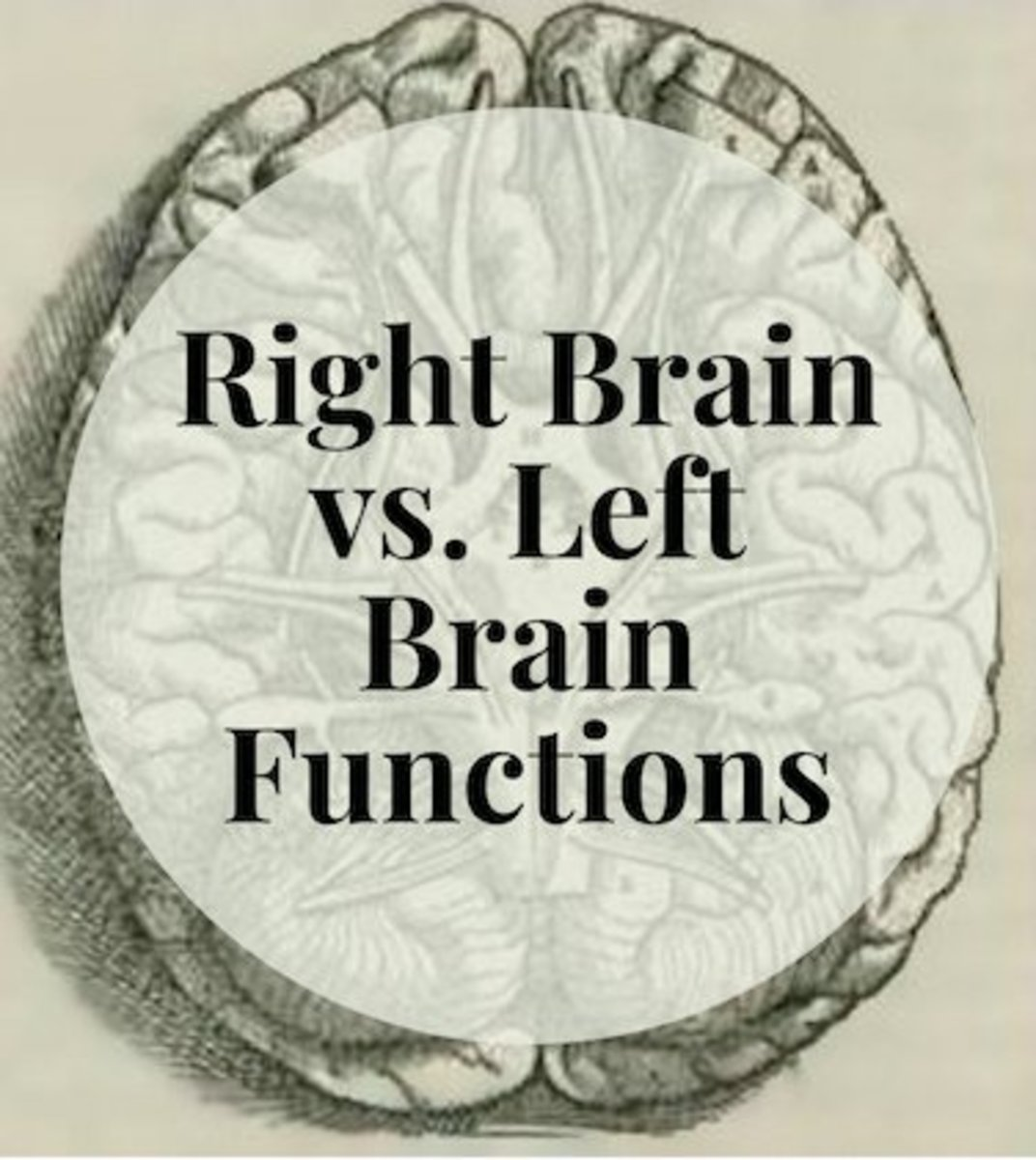 Learn the different unique characteristics of the right and left brain.