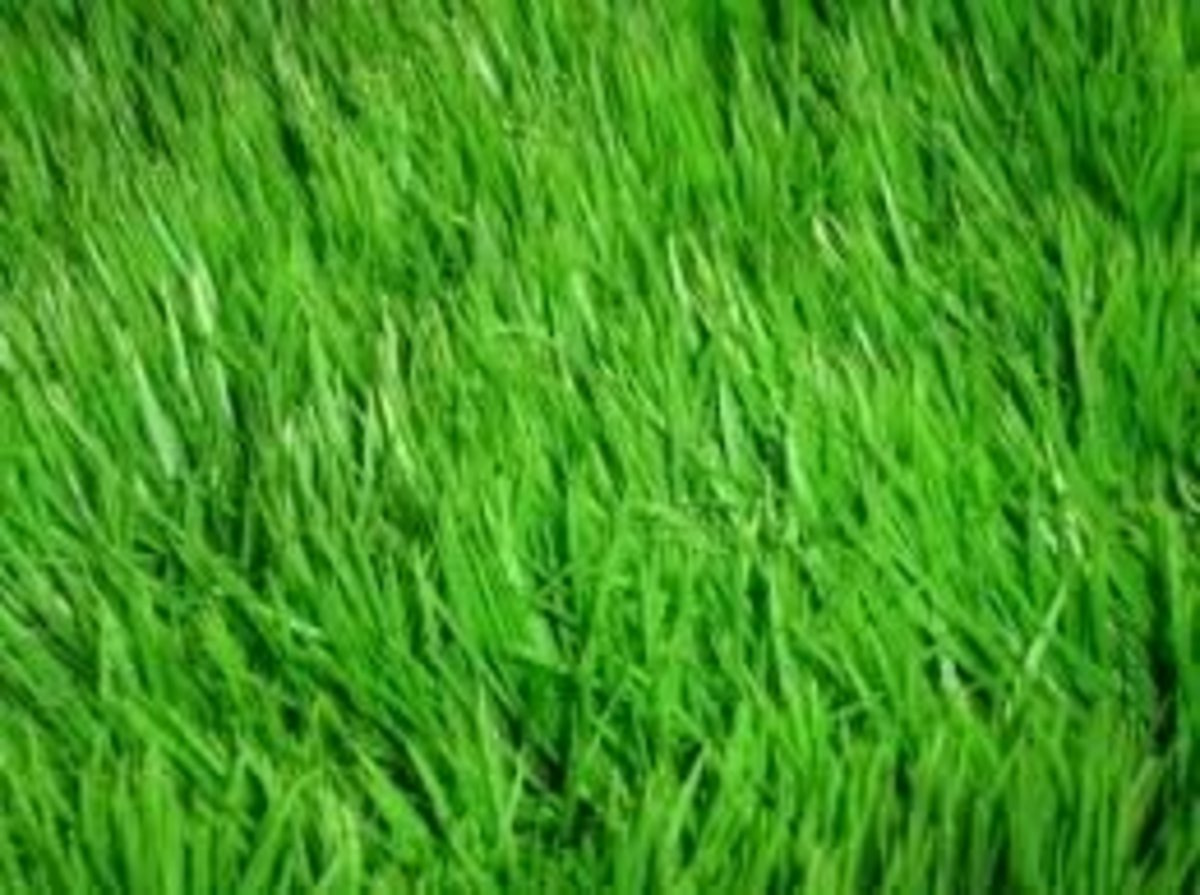 How to Fix Dead, Thin, or Discolored Grass