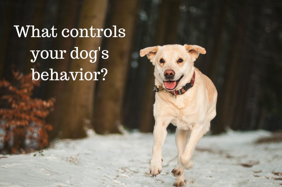 Do you know what influences your dog's behaviors?
