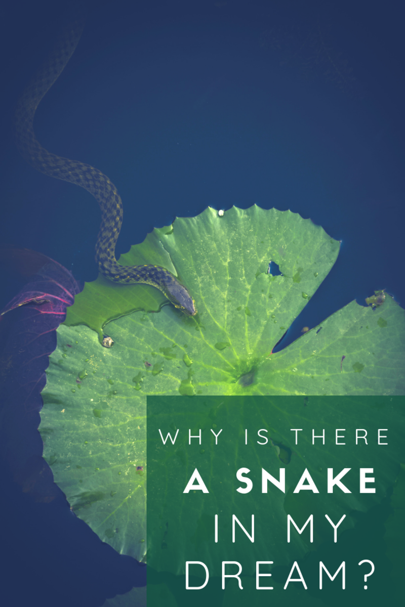 What Do Dreams About Rattlesnakes and Other Snakes Mean