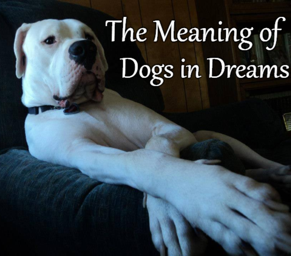 What Dreams About Dogs Mean and How to Interpret Them