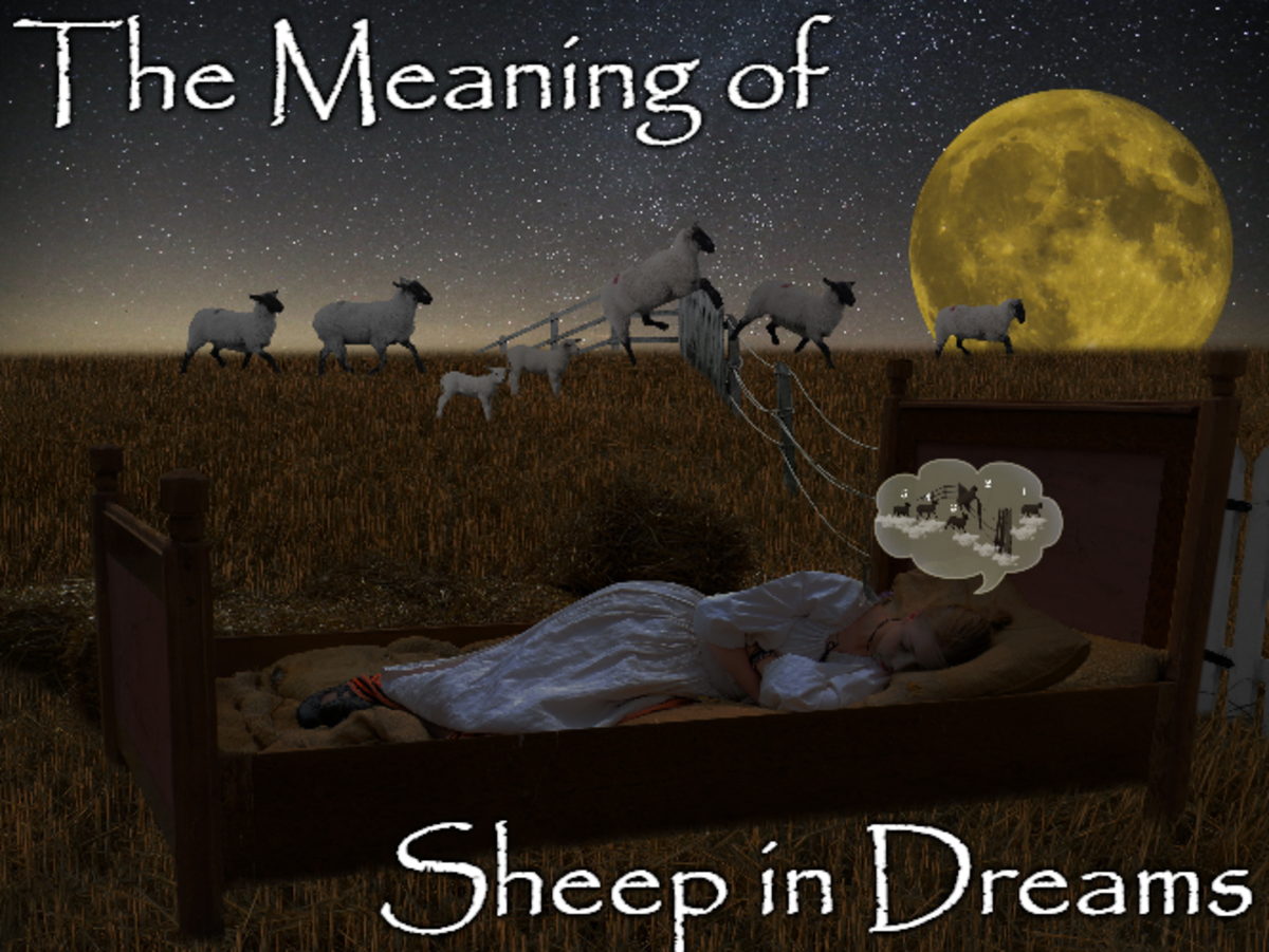 Many of us count sheep to fall asleep, but some of us also encounter them afterward in our dreams.