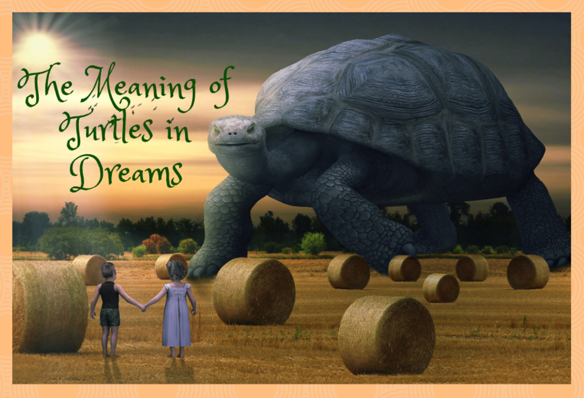What Do Dreams About Turtles Mean?