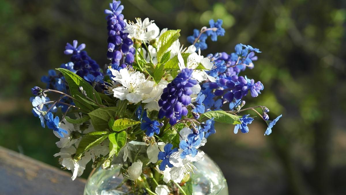 How To Make Bouquets Of Cut Flowers Last Longer Dengarden