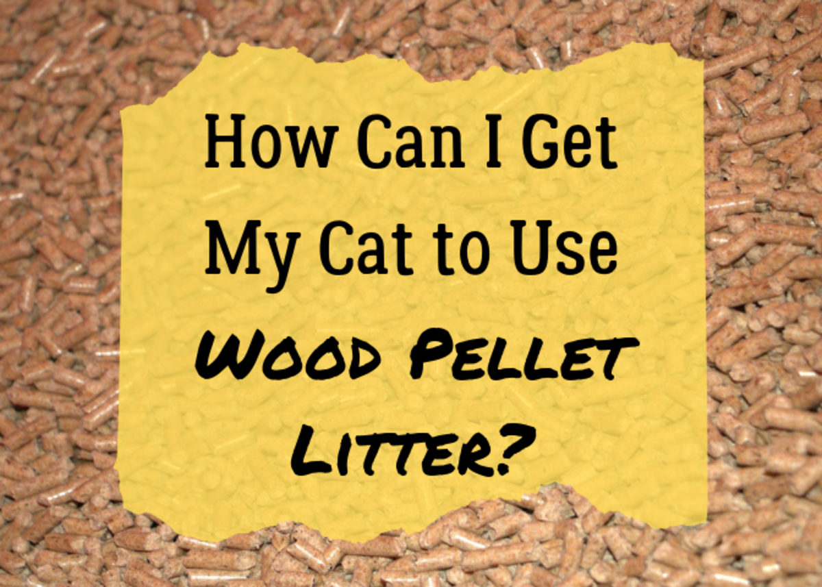How to Train Your Cat to Use Wood Pellet Litter
