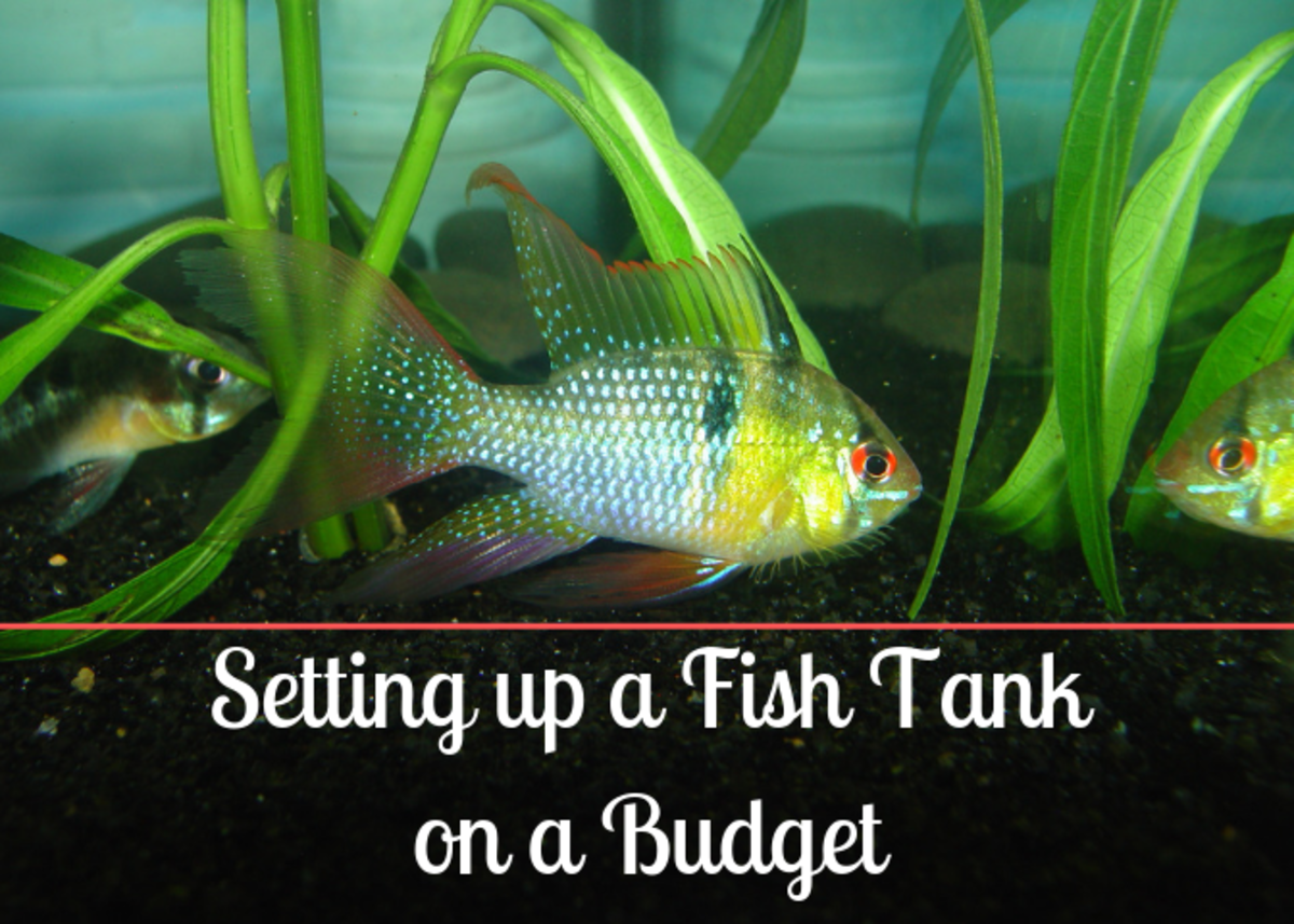 setting-up-a-fresh-water-aquarium-cheap