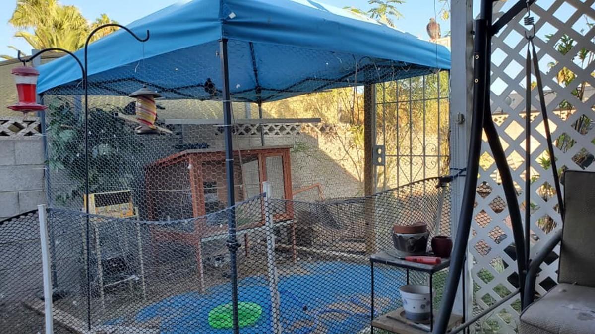 How to Build an Inexpensive Backyard Aviary