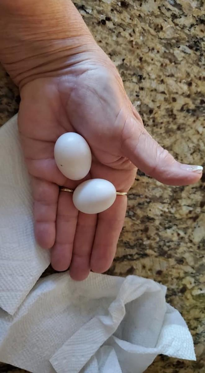 1 Week Old Eggs