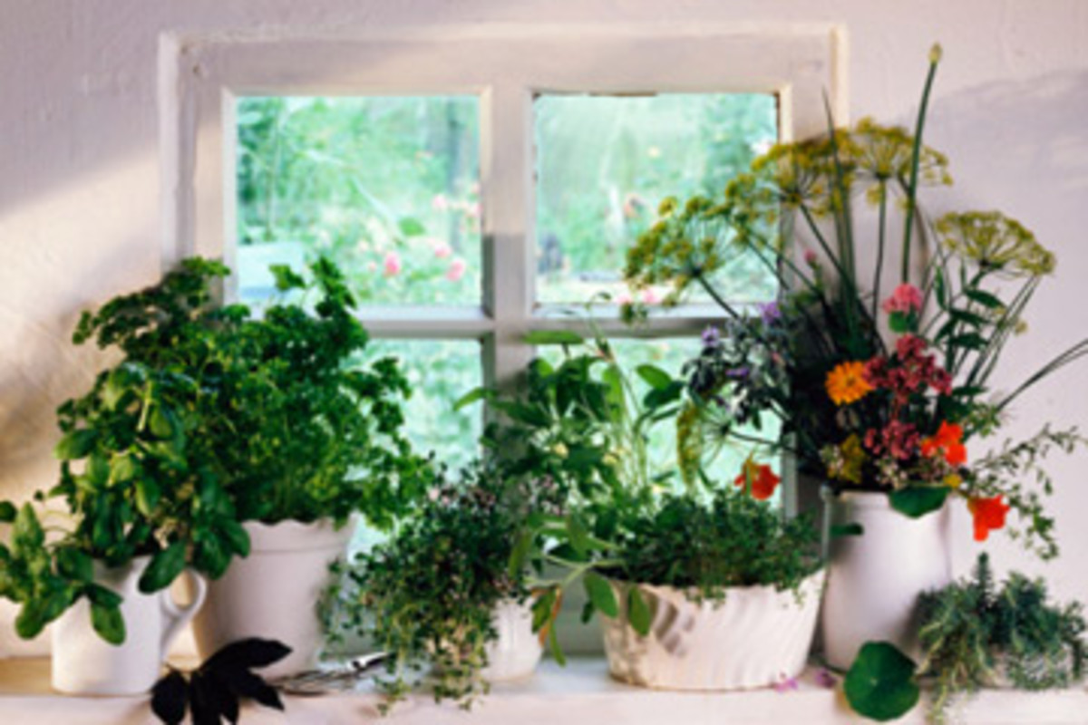 How to make an indoor herb garden