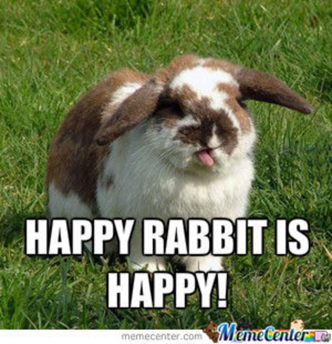 buying-a-pet-rabbit