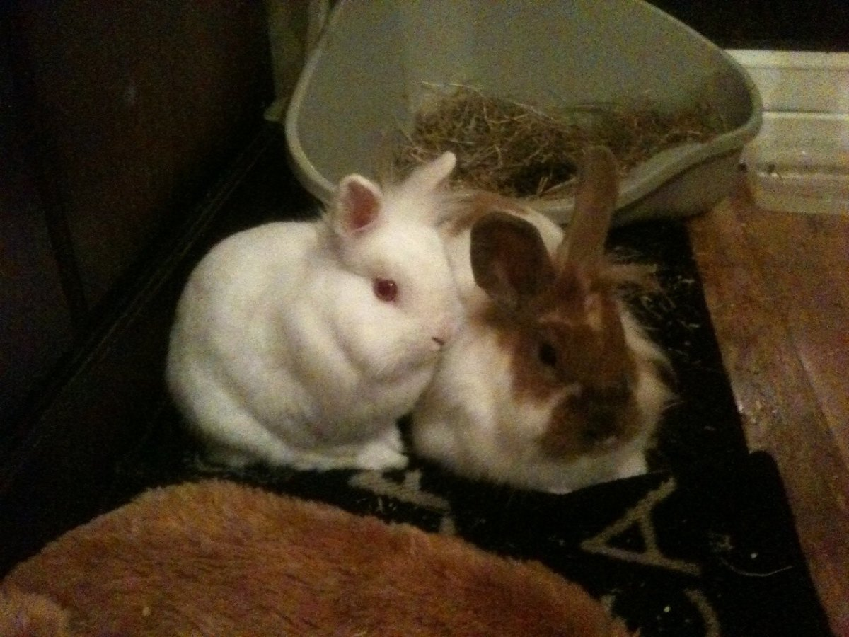 New Buns Bobby and Bo getting used to their night time space