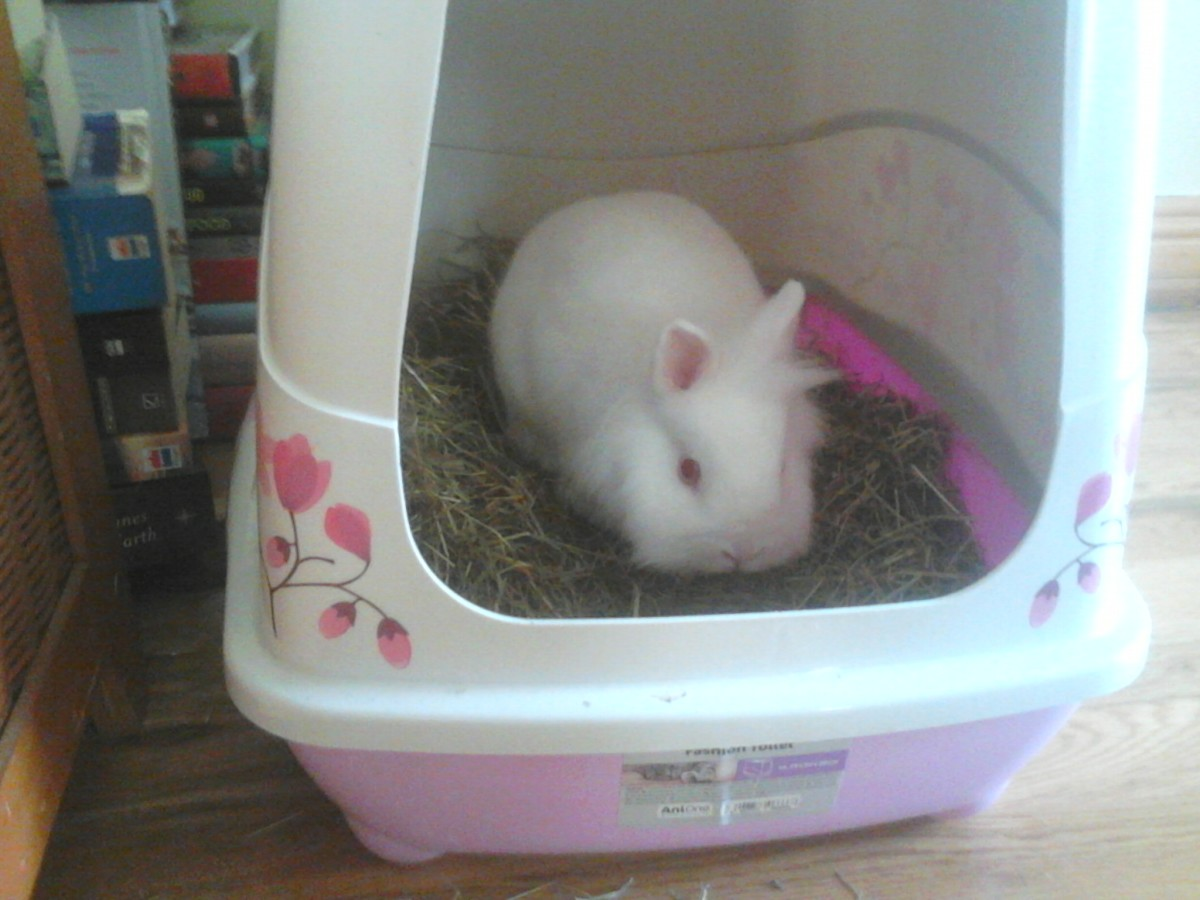 Litter box (much cleaner than the trays), Spacious and cute