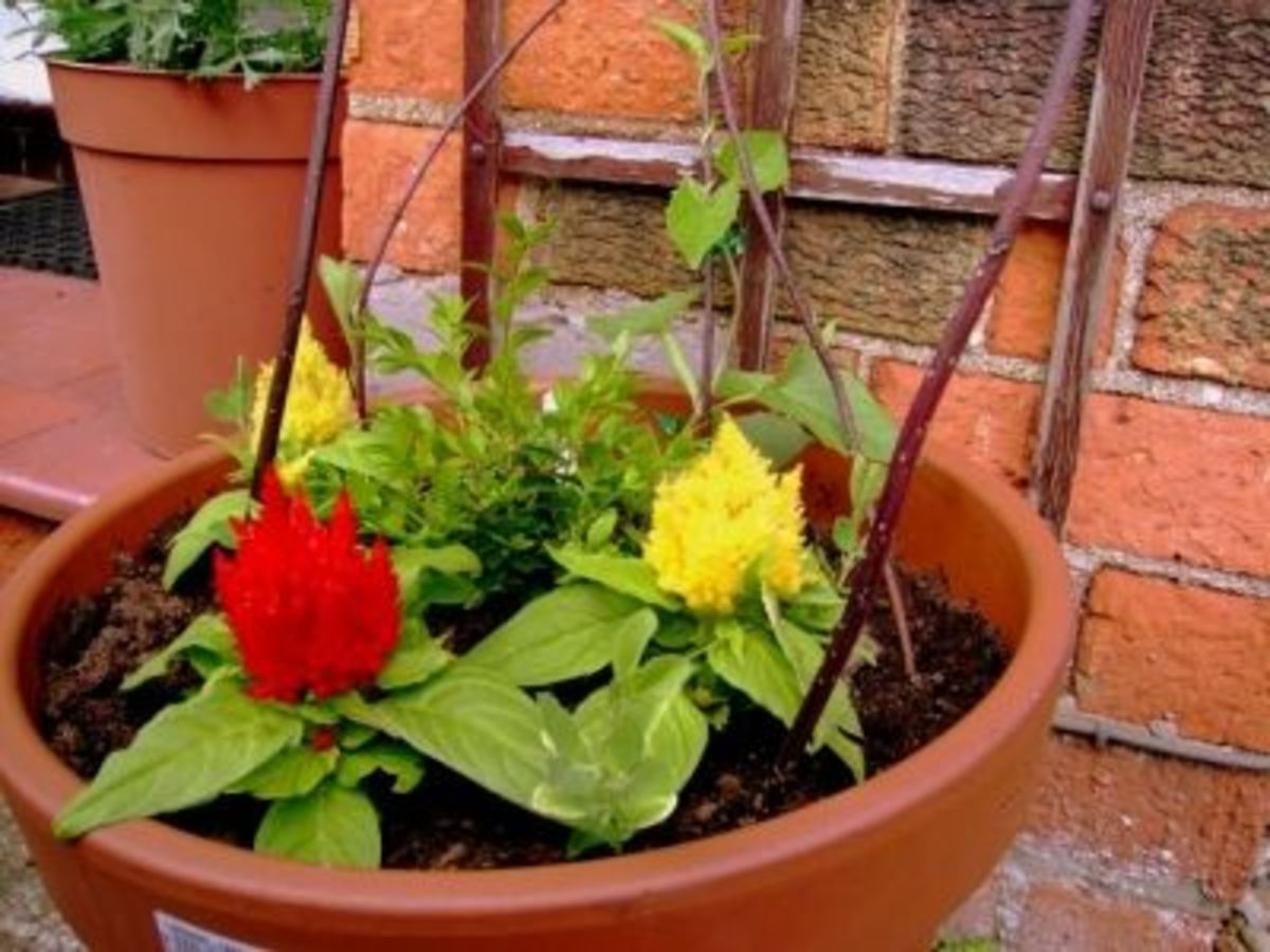 Gardening In Pots Pain Free Gardening