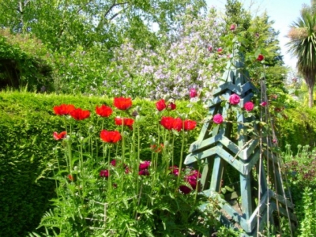 Romantic Roses, Perfect Poppies  In The Garden