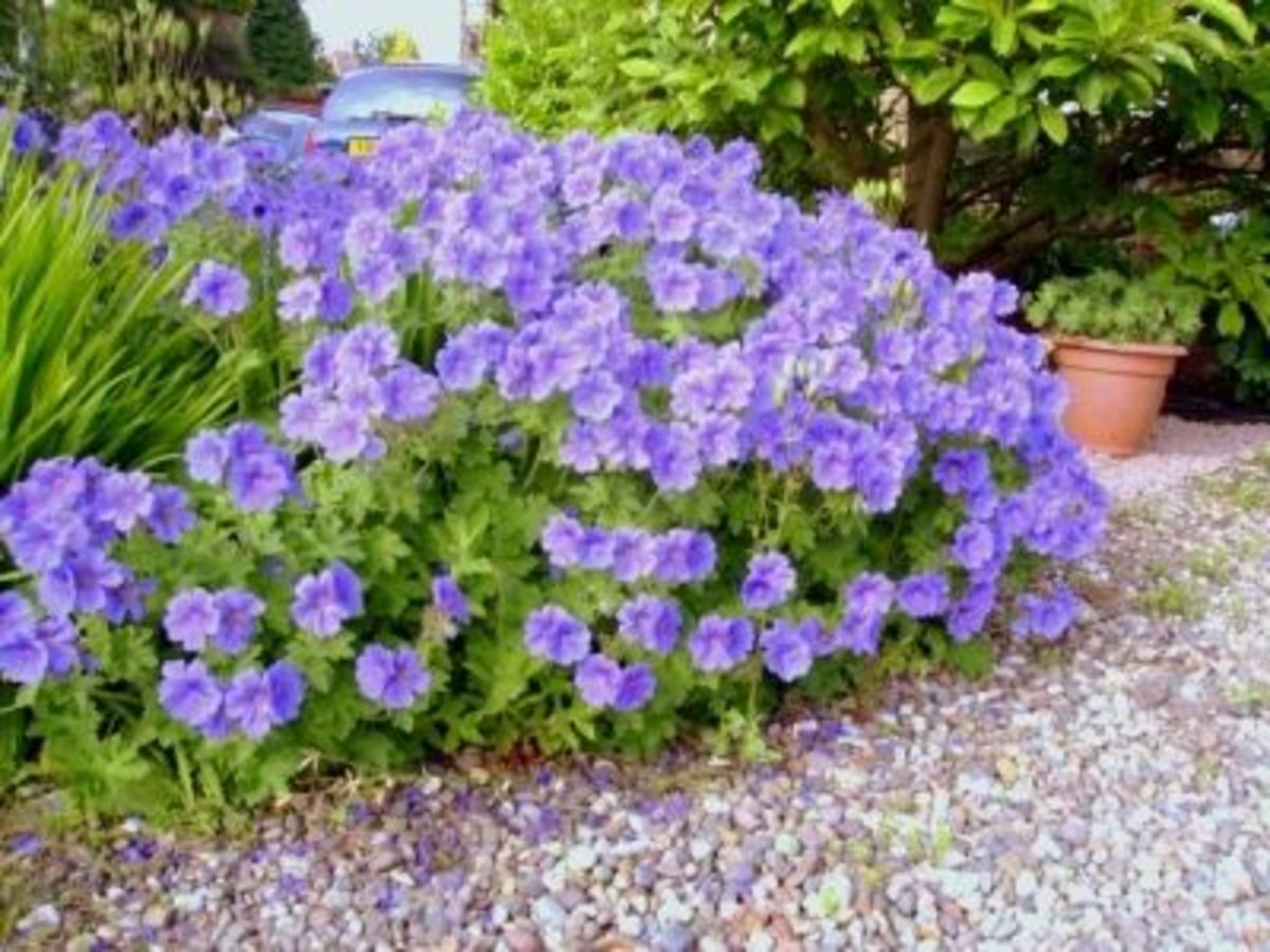 Flowers In Gravel