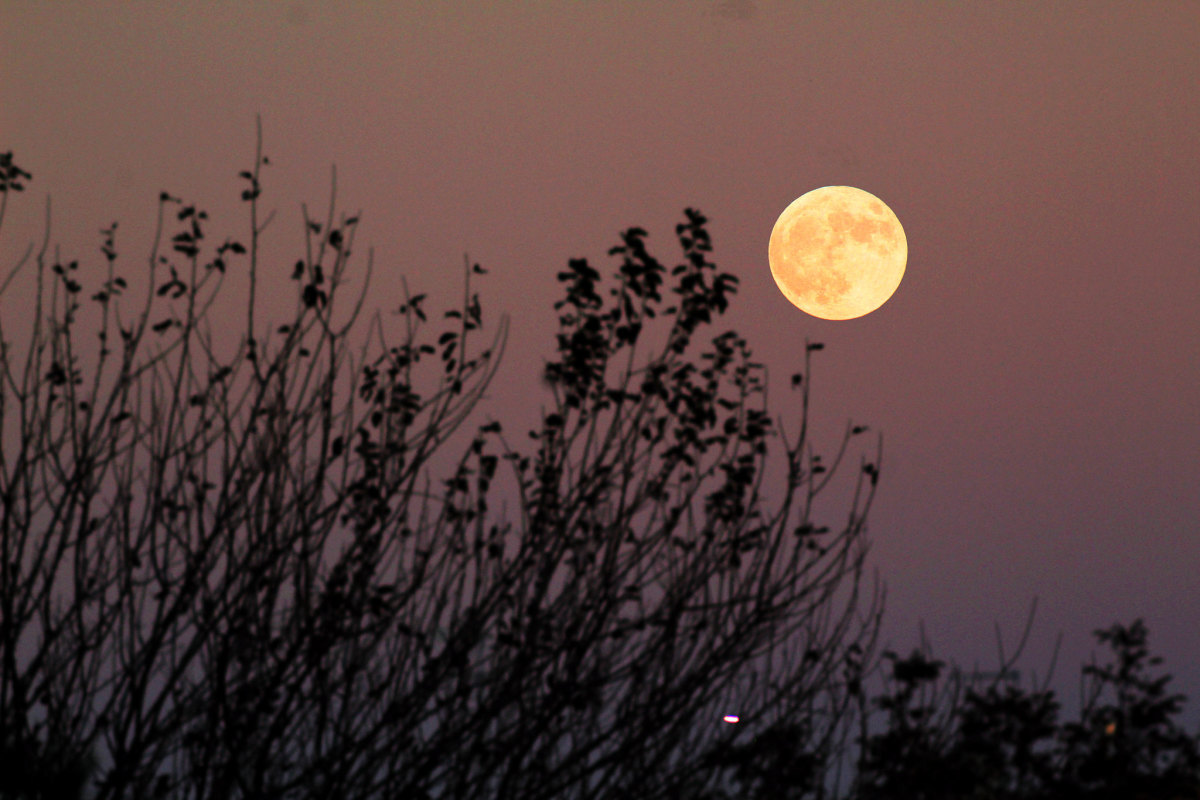 Celtic peoples used the lunar calendar. The Gaelic word for month is Mios relating to the moon's disk shape.