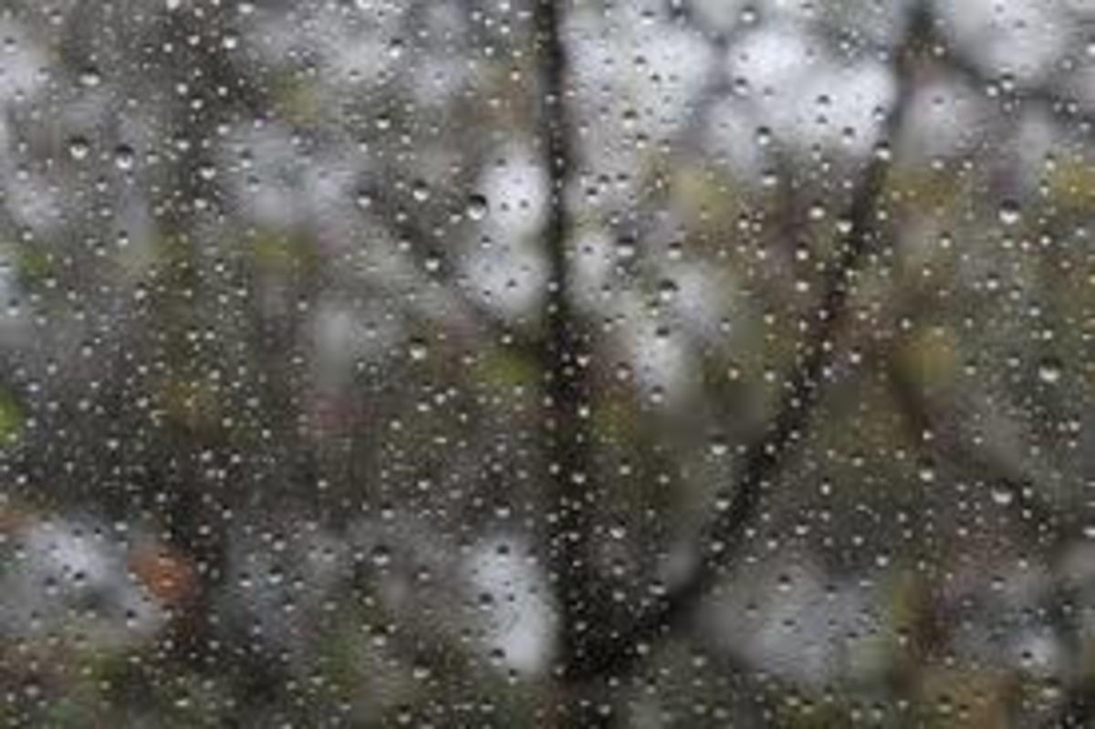 The Ectasy the Rain Brings