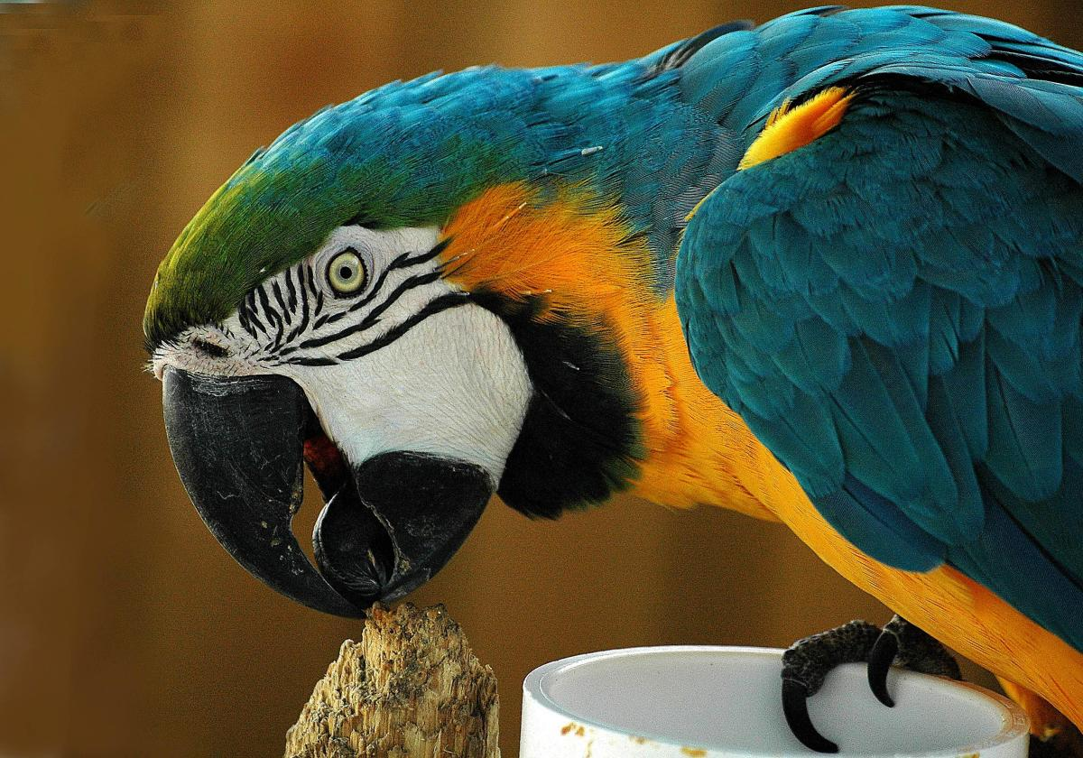 Photo: Parrot Uses Beach to Test Perch.